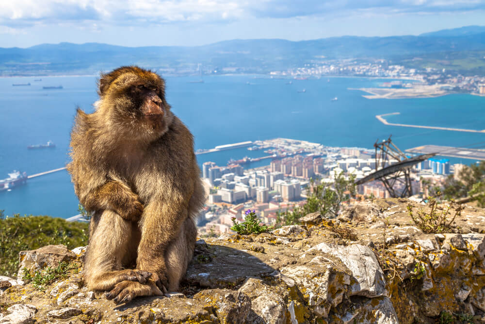 monkey sitting on hill in Gibraltar